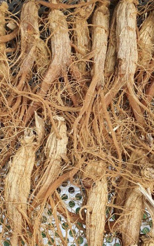 Nhân sâm khô nguyên củ truyền thống
