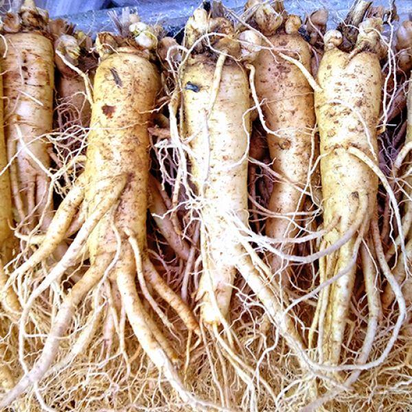 12-15 roots per kg type 1
