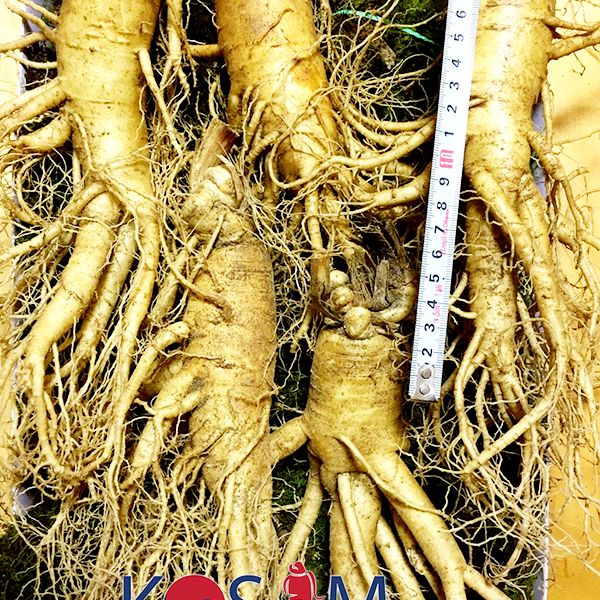 5 roots per kg type 1