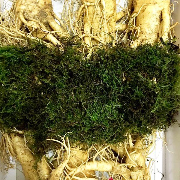 6 roots per kg type 1