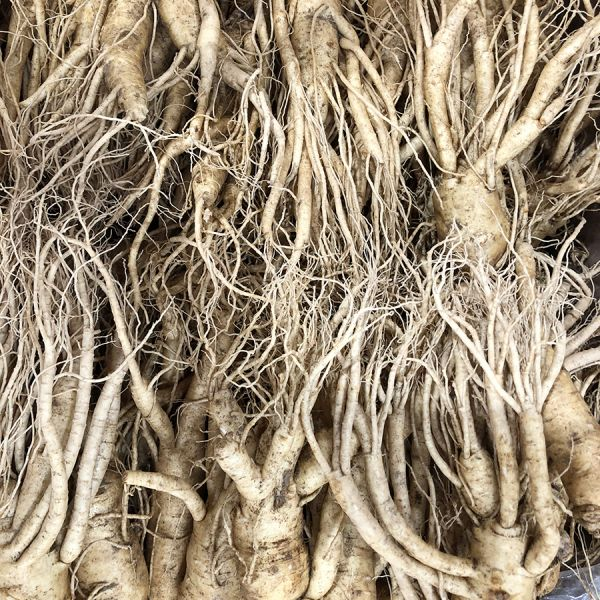 16-20 roots per kg type 2
