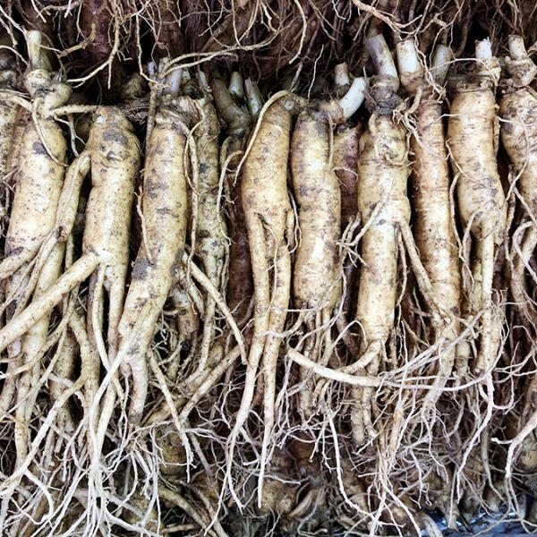 16-20 roots per kg type 1