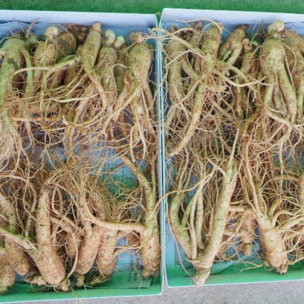 25-35 roots per kg type 2