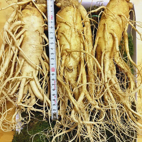 3 roots per kg type 1