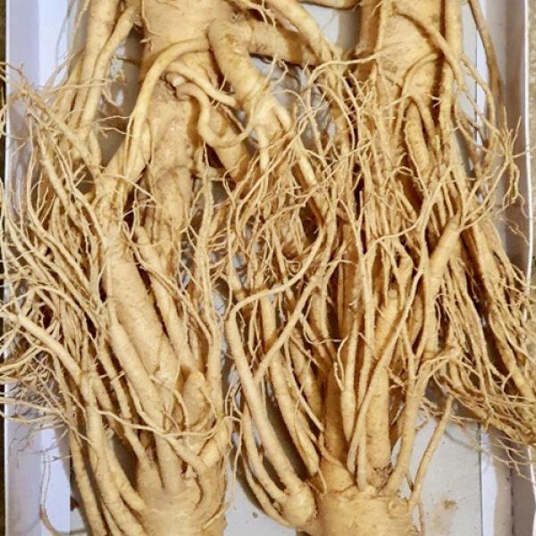 4 roots per kg type 1