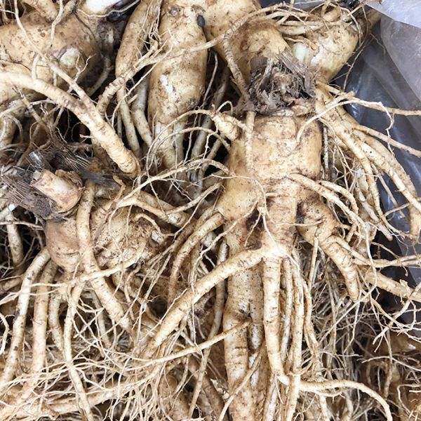 8 roots per kg type 2