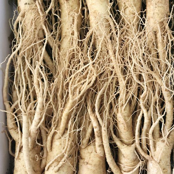 9-11 roots per kg type 1